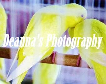 Pájaros del amor por Deanna Bernal