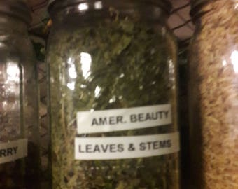 American Beauty leaves & stems
