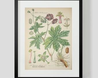 Botanical Print Plate 318