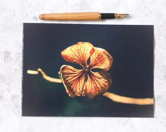 Flower photo card   photographic card   photo print   nature photo   for her   for gardener   for nature lover   leaves   hydrangea