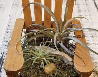 Adirondack Chair with Air Plants