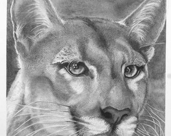 Puma original graphite on bristol heavyweight paper