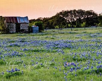 Farm Backdrop Digital Backdrop Spring Blue Bonnets Sitter Family Download Field Old Farm Flowers Fairytale Composite Landscape Smoke House