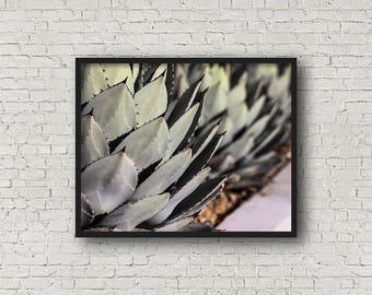 Kaktus Print / Digital Download / Fine-Art Print / Kunst / Home Decor / Farbe Fotografie / Natur Print / Naturfotografie