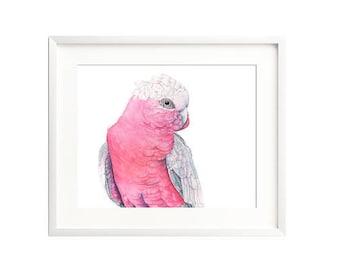Galah watercolor digital print, 4 sizes. Australian bird watercolor digital print, Parrot digital print watercolor, bird watercolor digital