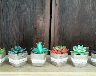 Small Succulents Wedding Decorations Favors