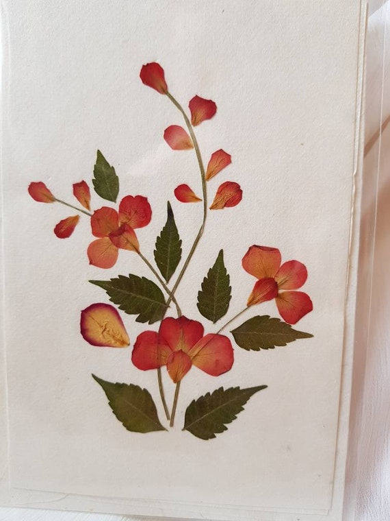 Real pressed flower greetings card single plant design 2