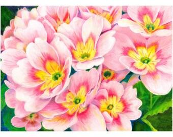 Primrose Flower Art Print 12 x 16 High Quality Print