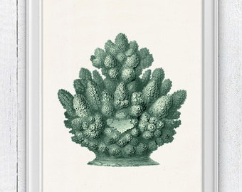 The great mint Coral- sea life print - Marine sea life illustration A4 print SWC079