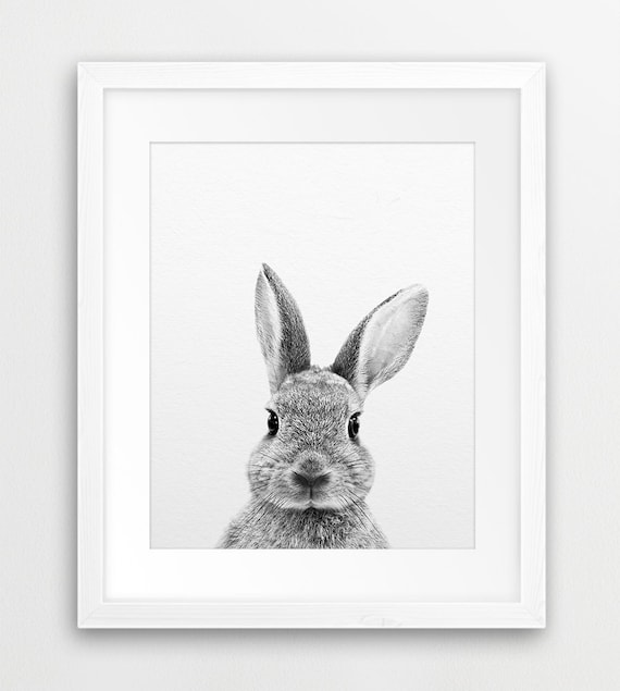Black And White Rabbit Prints