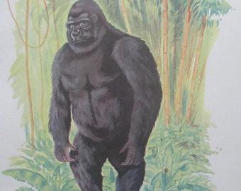 Rossignol school poster: the cat / monkey