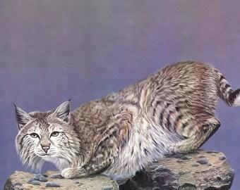 Bobcat, American Wildcat, wildlife,
