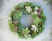 Succulent Wreath Kit 12 inch diameter