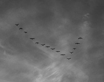 Grey Sky Geese