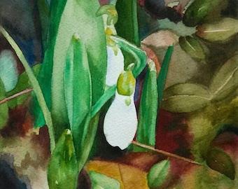 Snowdrop ~ original watercolor painting