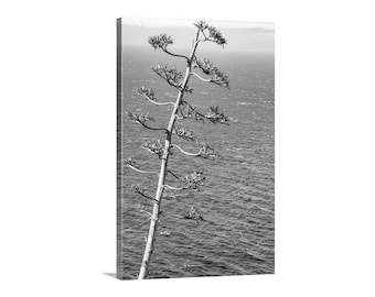 Big Sur Photo, Agave Art, Black and White, Big Sur Ocean Art, Pacific Coast Highway, California Coast Art, Big Sur Gift, Vertical Print