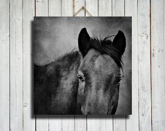 Bay Boy - Horse photography - Horse art - Horse canvas art - Horse canvas decor - Horse decor - Black and white photography