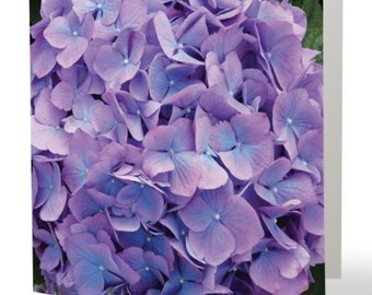 Hydrangea - single blank card, Gifts for her, Gifts for mom, Gifts for nature lovers, Gifts for gardeners