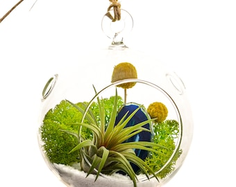 Air Plant Terrarium with Moss, Flowers, Rocks and Blue Agate Slice / Surf's Up