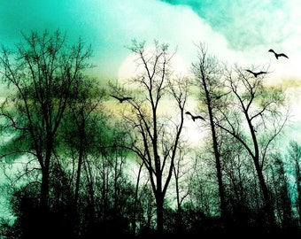Abstract landscape photography dreamy trees birds nature aqua teal sky - 'Forest edge'  8 x 10
