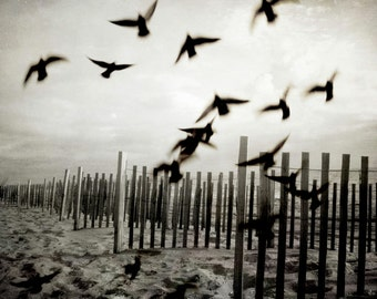 Birds on Beach Photograph, Black White Dark Brown Print, Beach Fence,Birds in Flight, Outer Banks Wall Art 8x10 and up