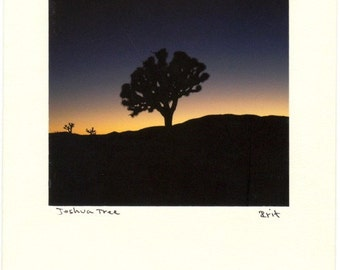 Card,  Joshua Tree in a Deep Blue Sunset