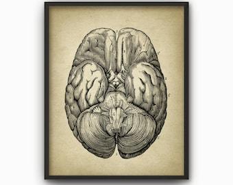 Human Brain Print #4 - Vintage Brain Anatomy - Base Of Human Brain - Neuroscience - Brain Art - Human Brain Anatomy Science Poster