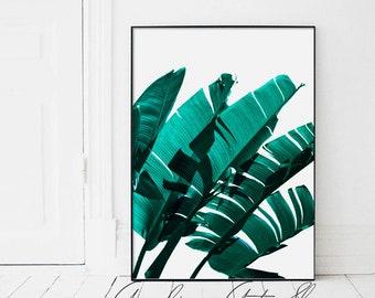 Emerald Green Banana Leaves, Banana Leaves, Green Banana Leaves, Banana Leaf, Emerald BananaLeaves, Tropical Leaf, Green Banana Leaf