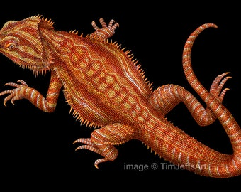 Bearded Dragon 2 Colored Pencil Drawing