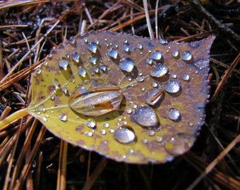 Water Drops on Fall Leaf Print