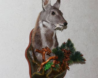 Siberian Musk Deer - Taxidermy Head Shoulder Mount, Stuffed Animal For Sale - Musk-Deer - ST3894