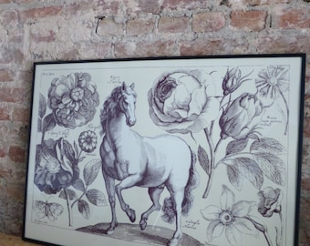 Decorative hand-pulled screen print of a horse based on 17th century print of Wenceslaus Hollar. 50cm x 70 cm