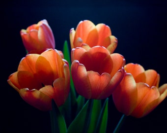 Tiptoe into Spring Fine Art Photograph