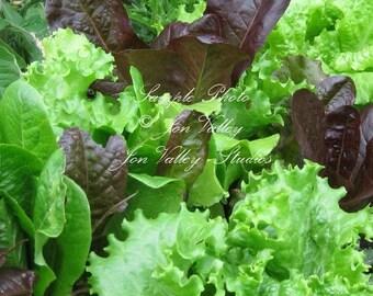 Serendipity's Gourmet Heirloom Lettuce Blend 250 Seeds! Garden Vegetable Leaf Lettuce Make beautiful and Fresh Tasty Salads!