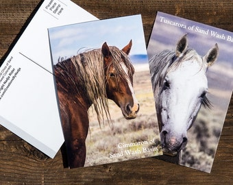 Wild Horse Postcards - Mustangs of Sand Wash Basin Northwest Colorado - Set of Six