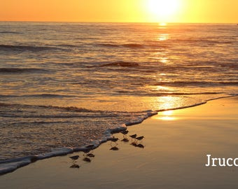 California Beach Sunset Bird Photo Print Custom Sizes Newport Beach Ocean Summer
