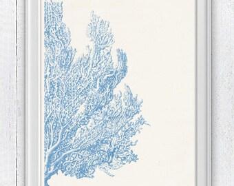 Light blue Sea fan coral no.04 - Antique sealife Illustration - sea life print-Marine  sea life illustration A4 print SWC041