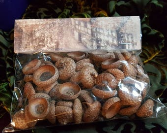 Dried Oak Acorn Caps for Altar Offerings or Decor/Real Acorn Caps/Fairy Offerings/ Pagan and Witchcraft Beltane Shrine/rustic home decor