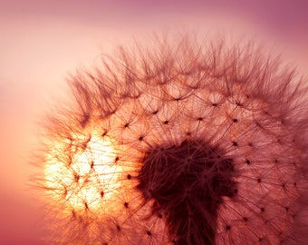 Dandelion photo Digital Download Photography dandelion seeds dandelion against sunset sky