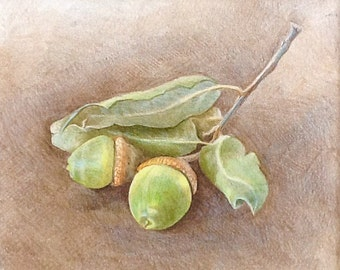"""Colored Pencil Drawing - Acorn Still Life - Original Wall Art - Woodland Home Decor - Mat included with drawing 9""""x10"""""""