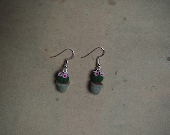 "Earrings cactus, houseplant, ""Gymnocalycium baldianum"""