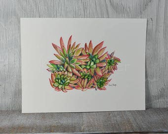 Echeveria, Hens and Chicks, original watercolor painting 12 x 9