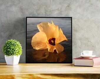 Tropical Hibiscus Unfurled Beauty - Photo Print Canvas Wood Acrylic Metal - 5997