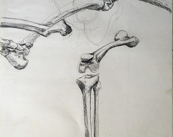 Human Skeleton Legs Bone Study in Charcoal
