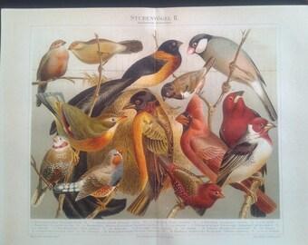 """Chromolithograph, """"Exchange birds II.""""."""