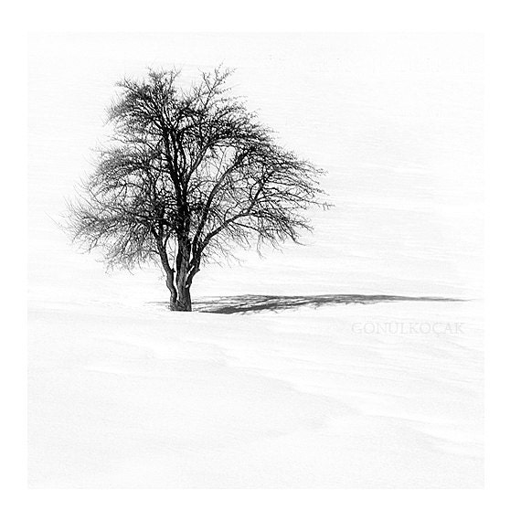 Items similar to black and white photography tree nature photography landscape winter photography snow photography photo print 8x8 inch on etsy