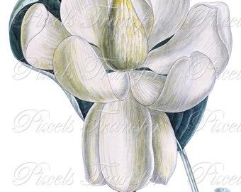 MAGNOLIA Instant Download, Digital Download collage sheet wedding clipart white magnolia 288