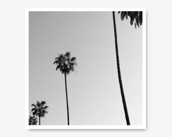 LA Travel Photo, Los Angeles, Palm trees, Black and White, Landscape Photography, Tree print, Black and White Photo,  Art Print, LA