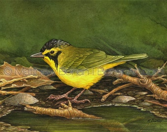 Watercolor Print, Watercolor Painting, Wall Art, Home Decor, Nature, Wildlife Illustration, Kentucky Warbler