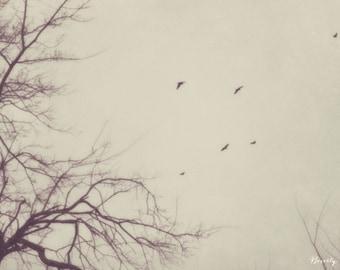winter, birds, flying, nature, fine art photography